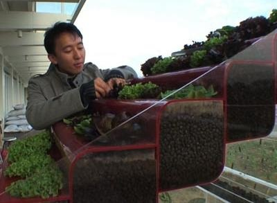 News video: Hong Kong Residents Help Create Green Roofs